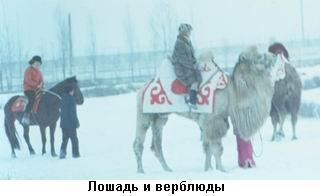 Лошадь и верблюды