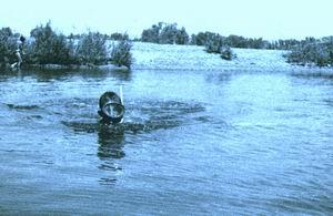 Плывущий по реке