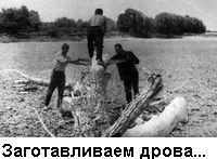 Фото: Заготавливаем дрова