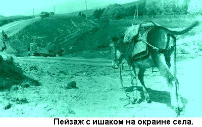Фото: Пейзаж с ишаком на окраине села