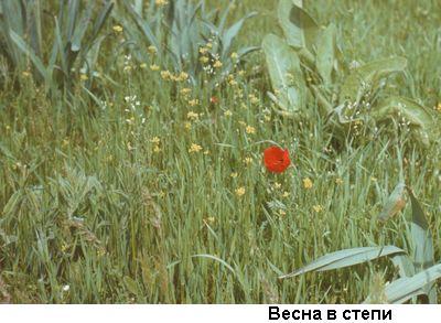 """""""Фото: весна в степи"""""""