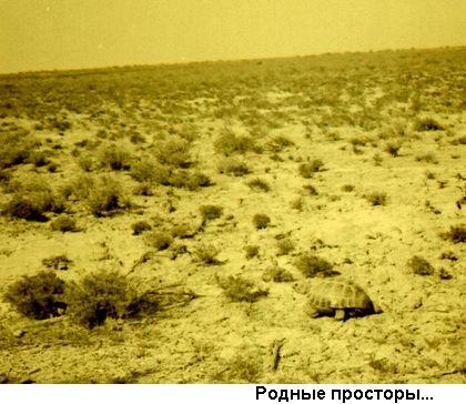 """""""Фото: степь, черепаха"""