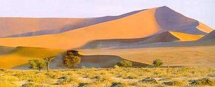 Фото: пустыня